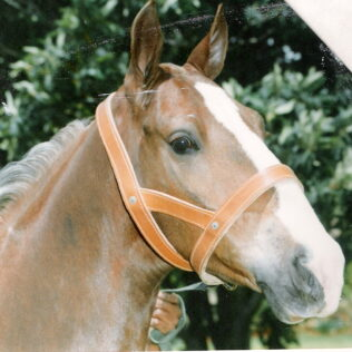 Double Leather Head Collar