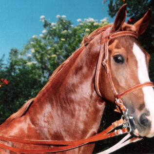 Double leather stiched bridle with nose band and reins