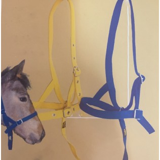 Foal or Pony Nylon Halter