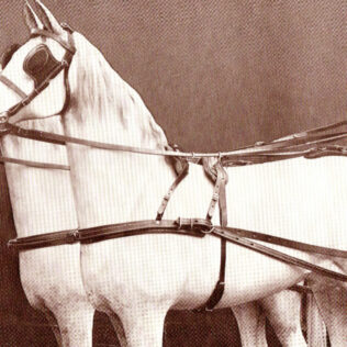 Leather Double Horse Harness