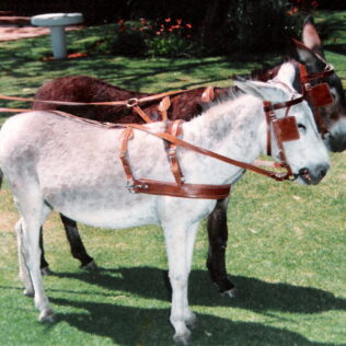 Nylon Double Donkey Harness
