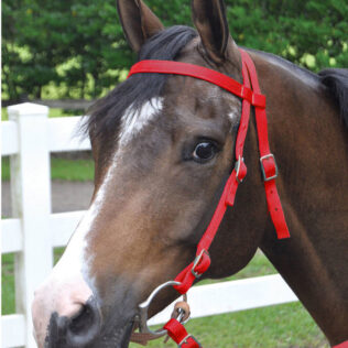 Nylon Pony Bridle with Reins (in assorted colours)