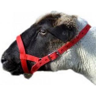 Nylon Sheep Halter