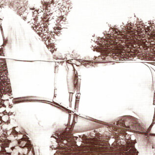 Nylon Single Horse Harness