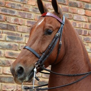 Show Bridle Double Reins