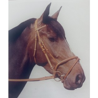 Single Bridle with Raised flash nose band and Reins