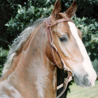 Single Bridle without Nose band with Reins
